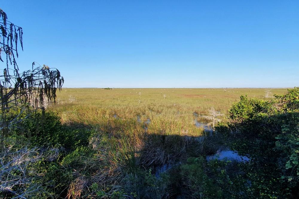 South Florida: vista sulla distesa paludosa delle Everglades dal Pa-hay-okee Lookout Tower