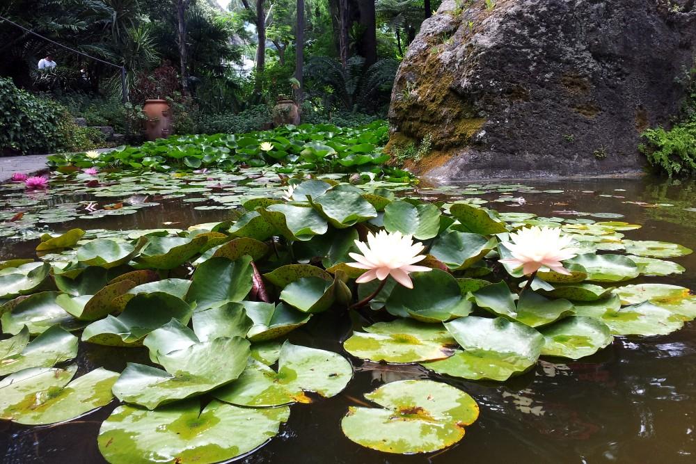 Lago di ninfee e fiori di loto nei Giardini La Mortella di Ischia