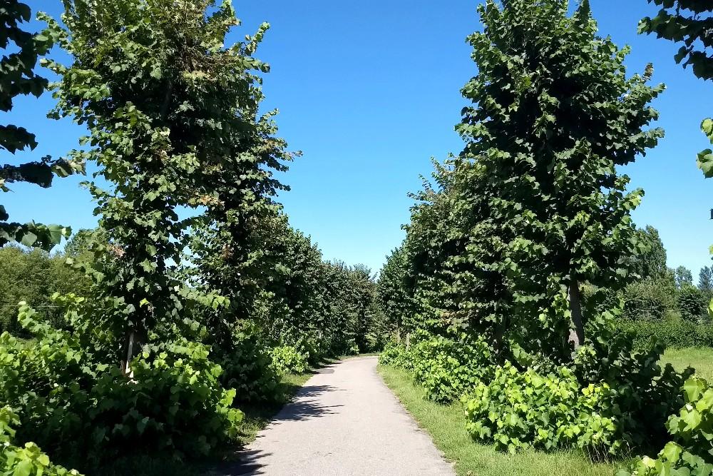 Strada tra alberi e campi nel borgo di Morimondo immerso nel Parco Regionale della Valle del Ticino vicino a Milano, Lombardia