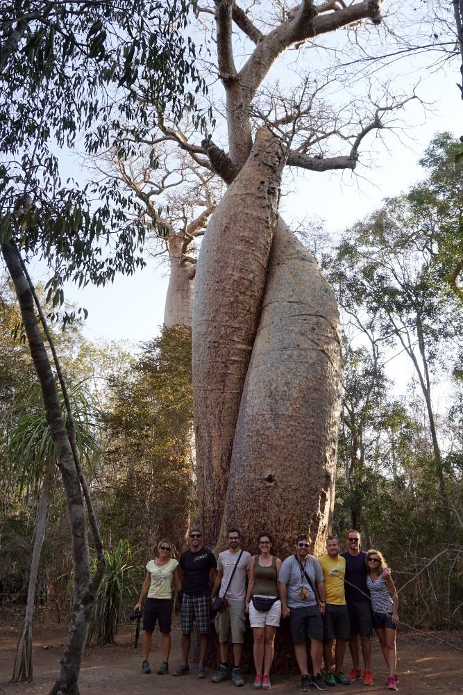 Baobab Lovers lungo la RN8 in Madagascar