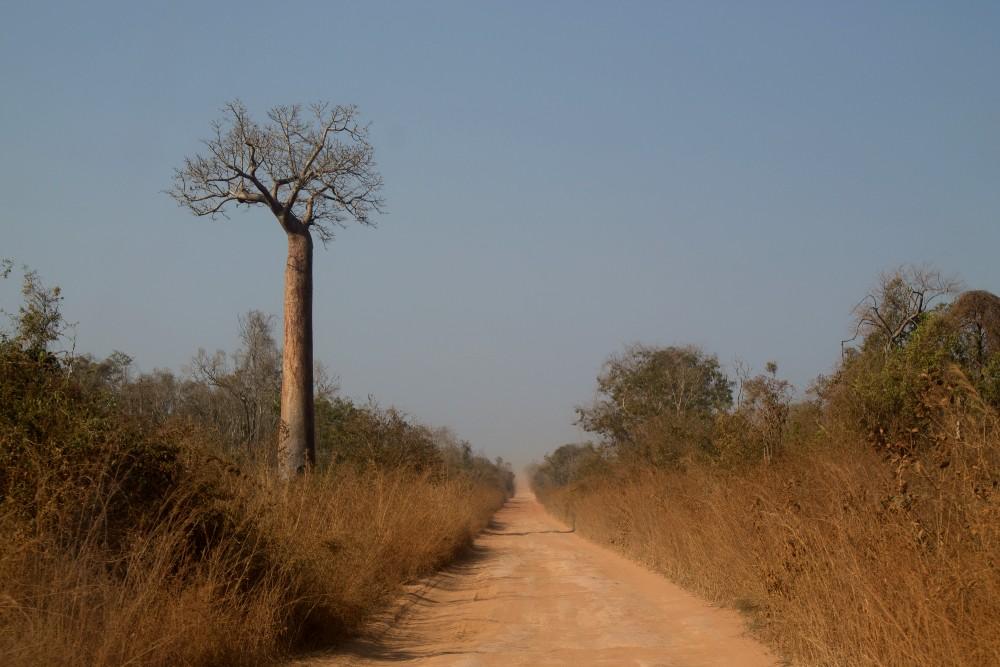 Strada sterrata Route Nationale 8 (RN8) in Madagascar verso il Parco Nazionale Tsingy di Bemaraha