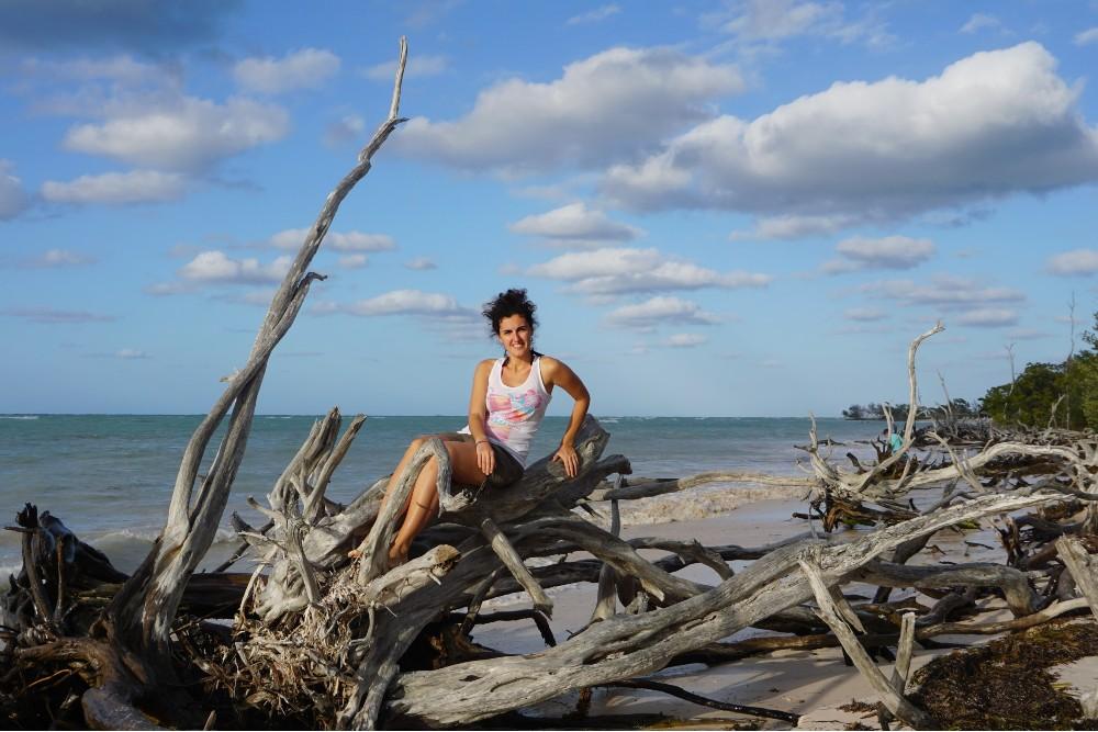 Viaggio a Cuba: spiaggia con mangrovie a Cayo Jutías
