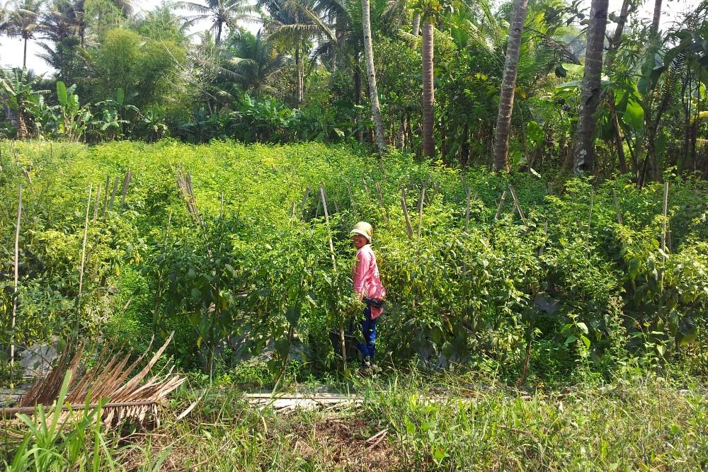 Contadina che lavora una piantagione nei dintorni del Borobudur e sorride al nostro passaggio