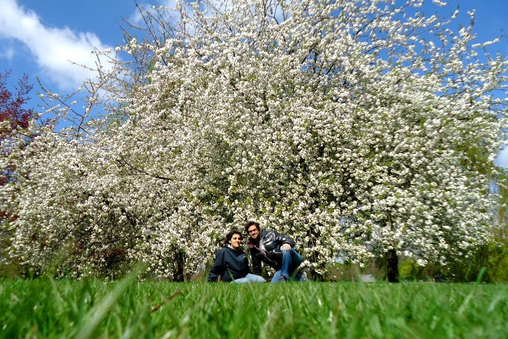 Alberi in fiore ad Hyde Park durante la primavera a Londra