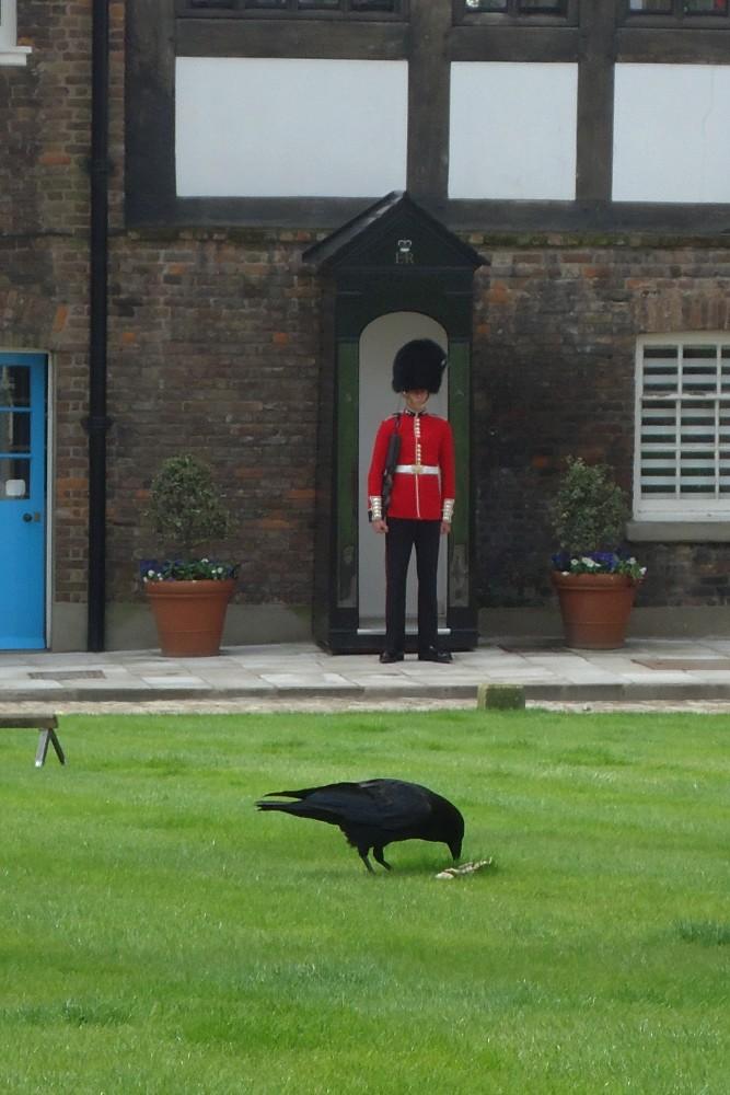 Cosa vedere a Londra: guardia e corvo nei prati della Tower of London
