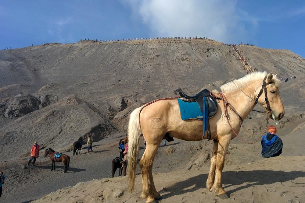 Salita al cratere del vulcano Bromo nella caldera del Tengger sull'Isola di Giava in Indonesia