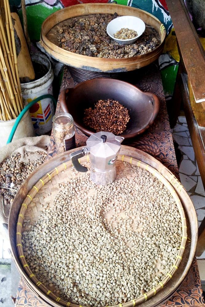 Chicchi di caffè ricavati dalle feci dello zibetto per produrre il Kopi Luwak a Yogyakarta sull'Isola di Giava in Indonesia