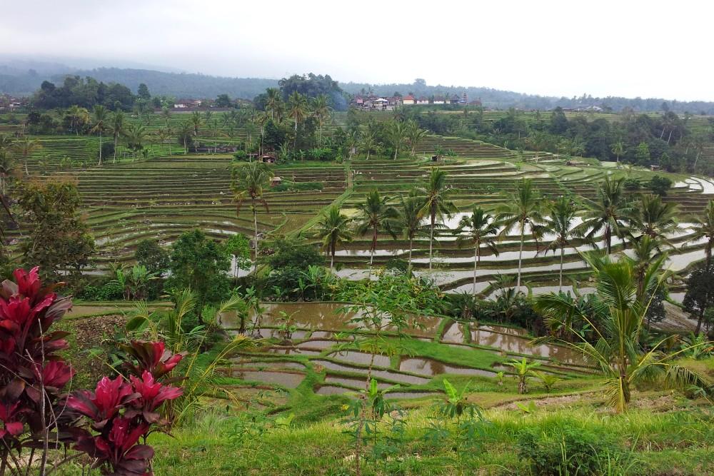 Terrazzamenti delle risaie di Jatiluwih a Bali in Indonesia.