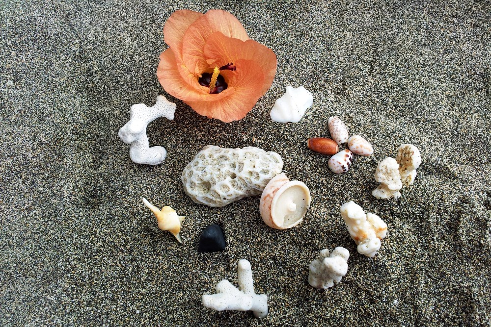 Fiori e conchiglie sulla spiaggia nera di Pemuteran a Bali in Indonesia.