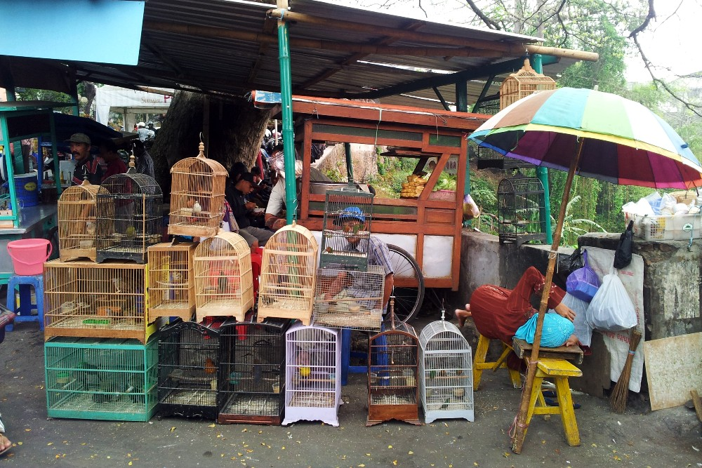 Cosa vedere a Malang: gabbie con uccelli al Pasar Burung.