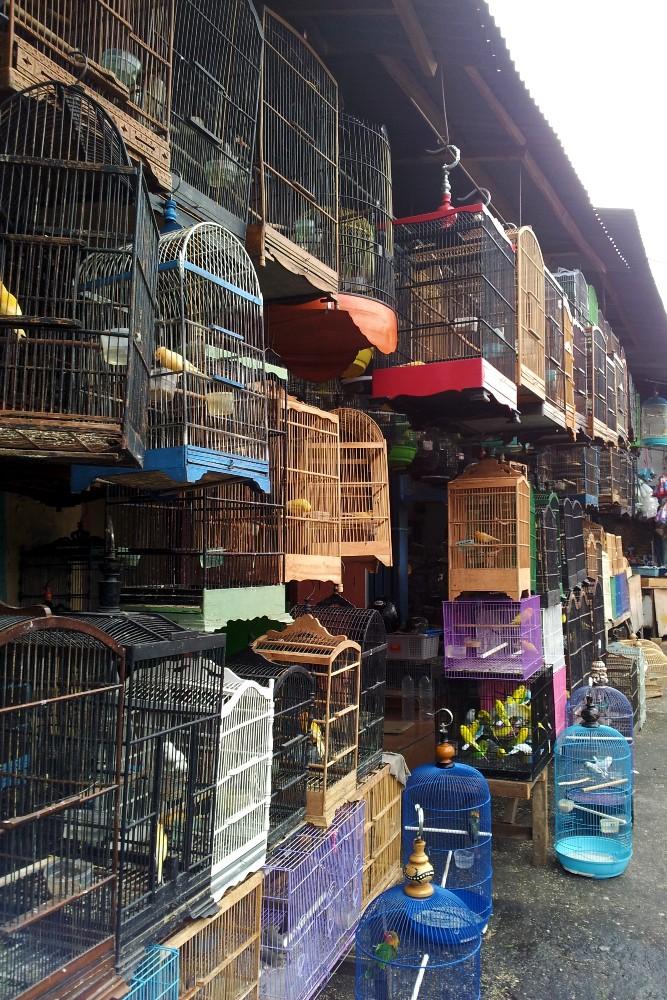 Gabbie con uccelli nelle strade di Malang al Pasar Burung.